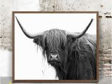 Highland Cow Wall Mural Buffalo Print Print In the 20×30 Size and Frame In A Walnut