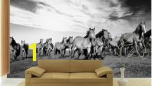 Horse Wall Murals Uk 23 Best Horse Wall Murals Images