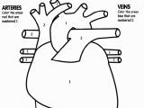 Human Heart Coloring Pages Printable Human Heart Coloring Page Awesome Tells Kids What Part to Color