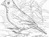 Idaho State Bird Coloring Page Idaho State Bird Coloring Page Alabama State Bird Coloring Page