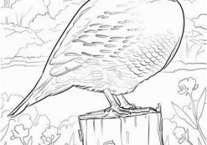 Idaho State Bird Coloring Page Idaho State Bird Coloring Page Idaho State Bird Coloring Page New