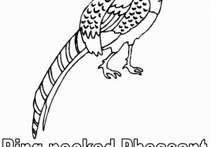 Idaho State Bird Coloring Page south Dakota Birds