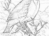 Iowa State Bird Coloring Page Iowa State Bird Coloring Page 28 Collection Nebraska State