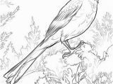 Iowa State Bird Coloring Page Iowa State Bird Coloring Page Alabama State Bird Coloring Page