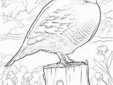Iowa State Bird Coloring Page Iowa State Bird Coloring Page State Birds Gallery Kids Coloring