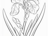 Iris Flower Coloring Page 8 Best Tattoos Images On Pinterest