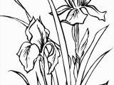 Iris Flower Coloring Page Color Drawing at Getdrawings