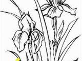 Iris Flower Coloring Page Iris A Pinterest Collection by Ros Fraser