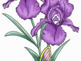 Iris Flower Coloring Page the Iris Flower is Of Interest as An Example Of the Relation Between