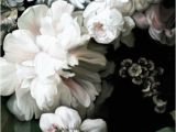 Ivory Rose Wall Mural Dark Floral Wallpaper In 2019