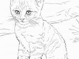 Kitten Coloring Pages to Print for Free Cat Coloring Pages for Adults Best Coloring Pages for Kids