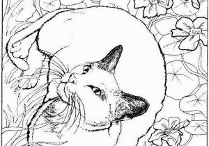Kitty Cat Coloring Pages Printable Pretty Kitty Coloring Page