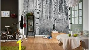 Komar Birch forest Wall Mural 34 Best Wall Murals Images