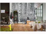 Komar Birch Wall Mural 34 Best Wall Murals Images