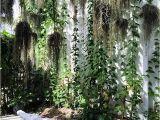La La Land Wall Mural Cocodrilo Planter at La La Land Wynwood Garden