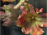 Large Tile Wall Murals Murals Of Bursting Flower Still by Trunk Archive 3000mm X