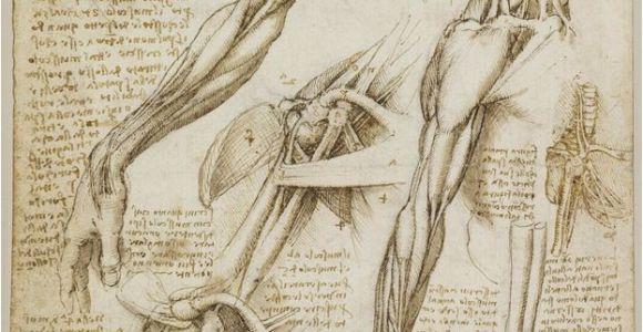 Leonardo Da Vinci Wall Murals A Rare Glimpse Of Leonardo Da Vinci S Anatomical Drawings