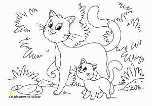 Litten Coloring Pages Cat to Colour Kitten Color Pages Elegant Kitty Cat Coloring