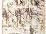 Lost Leonardo Da Vinci Mural Behind False Wall Anatomical Study the Muscles the Back by Leonardo Da Vinci