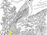 Meadowlark Coloring Page Flower Page Printable Coloring Sheets