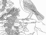 Meadowlark Coloring Page Free Printable Coloring Page oregon State Bird and Flower Western
