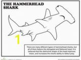 Megalodon Coloring Pages to Print 73 Best Shark Coloring Pages Images On Pinterest