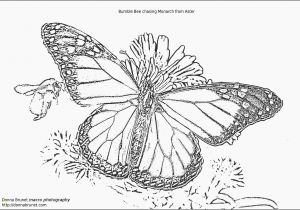 Monarch butterfly Coloring Page Free Printable butterfly Coloring Pages New Beautiful Printable Kids