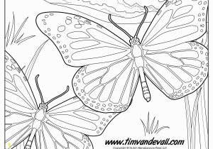 Monarch butterfly Coloring Page Monarch butterfly Coloring Page Tim S Printables