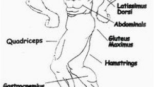 Muscular System Coloring Page 525 Best Example Family Coloring Pages Images
