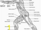 Muscular System Coloring Page for Kids 525 Best Example Family Coloring Pages Images