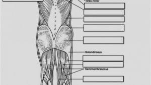Muscular System Coloring Page for Kids Anatomy and Physiology Coloring Pages Free Download