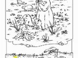 National Geographic Coloring Pages Coloring Book Animals A to I Science Pinterest