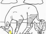 Okapi Coloring Page 102 Best Okapis Images