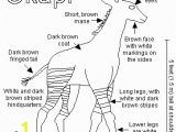 Okapi Coloring Page List Of Synonyms and Antonyms Of the Word Okapi Food