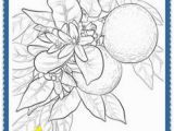 Oklahoma State Flower Coloring Page 85 Best Florida Images On Pinterest