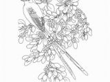 Oklahoma State Flower Coloring Page Tennis Wordsearch Crossword Puzzle and More