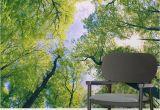 Outdoor Wall Murals Wallpaper Sun Breaking Treetops forest Square Wall Murals