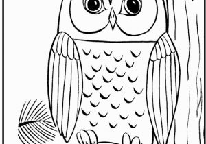 Owl In A Tree Coloring Page Owl Alighted the Big Tree Owls Pinterest