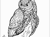 Owl In A Tree Coloring Page Owl On Tree Branch Owls Adult Coloring Pages