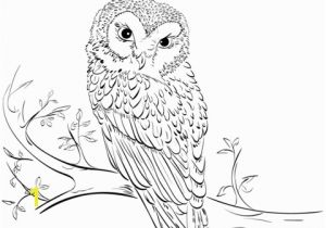 Owl In A Tree Coloring Page Owl On Tree Coloring Page