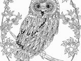 Owl Mandala Coloring Pages for Adults Owl Coloring Pages for Adults Free Detailed Owl Coloring
