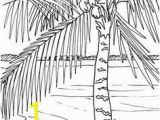Palm Tree Coloring Page 562 Best Beach Coloring Pages Images
