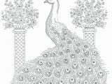 Peacock Feather Coloring Page Peacock to Print Peacock Feather Coloring Page New Coloring