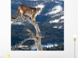 Peel and Stick Wall Murals Cheap Mountain Lion Od Dead Wall Mural by Wallmonkeys Peel and Stick
