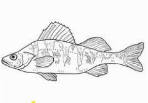Perch Coloring Pages 41 Best Embroidery Images