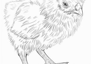 Perch Coloring Pages How to Draw A Baby Chick Step by Step Drawing Tutorials for Kids