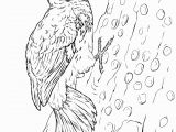 Pileated Woodpecker Coloring Page Pileated Woodpecker Coloring Page Fresh 69 Best Pileated Woodpecker