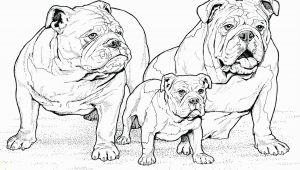Pillow Pet Coloring Page Printable Dog Coloring Pages Ideas for Kids