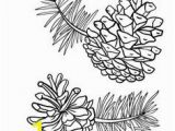 Pine Cone Coloring Page 558 Best Black & White Pictures Images In 2020