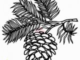 Pine Cone Coloring Page White Pine Cone Drawing Clip Art Pine Cone Clipart Panda